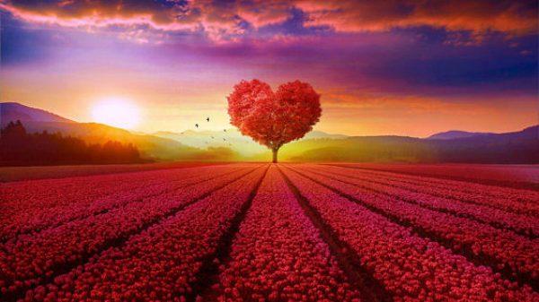 поле любви